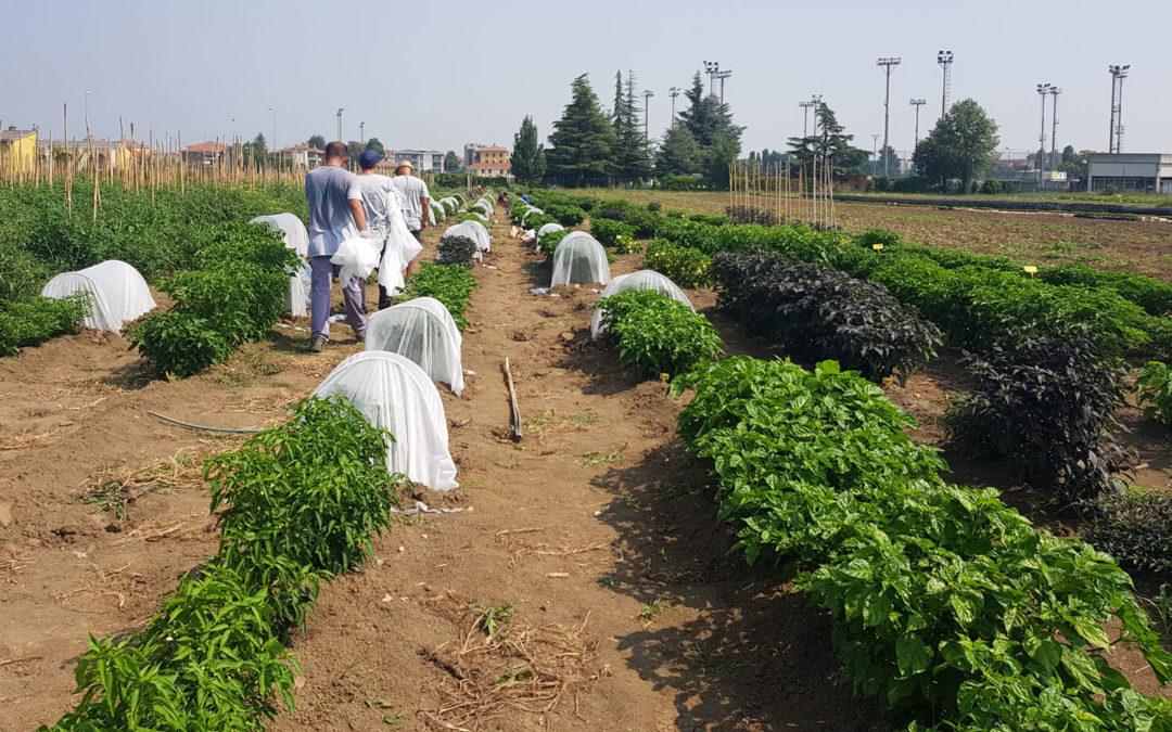 Progetto Barilla di agricoltura sociale: nei campi per rinascere