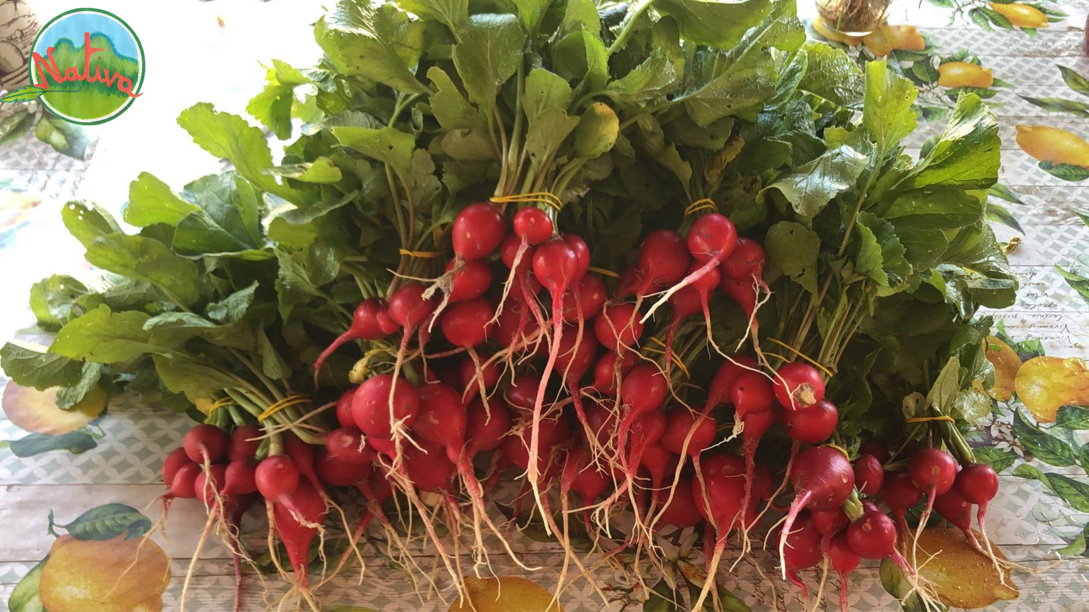 Le ricette di Nativa: foglie di ravanello, 3 idee per cucinarle